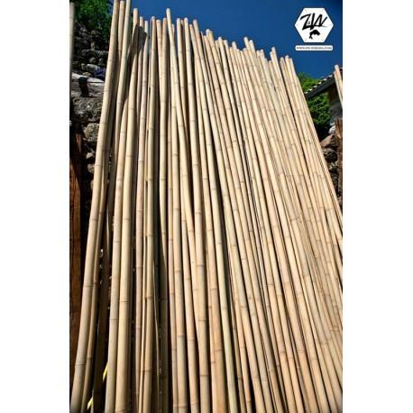Troncs de bambou (arundinaria amabilis)