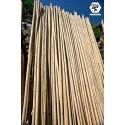 Tronc de bambou du Tonkin